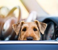 Huisdieren onderweg online kopen bij Site4Cars